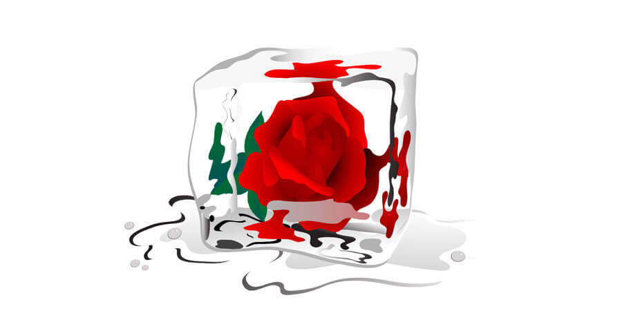 Relationships Inside-Out: Slow it down. Ice cube with a rose in it is melting.